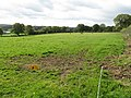 Grazing behind the electric fence - geograph.org.uk - 1008380.jpg