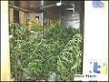 Grow house plants.jpg