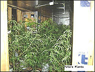 Grow house - Wikipedia