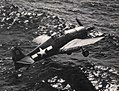 Grumman F6F Hellcat, about to make a water landing, circa in 1944.jpg