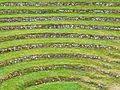 Gwennap Pit 2- the terraces (4907687948).jpg