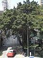 HK Sheung Wan Po Hing Fong Blake Garden tree taxi Feb-2011.JPG