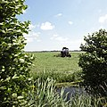 Hay turning with an IHC tractor and a rotary tedder, Utrecht province, Netherlands.jpg