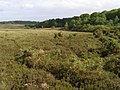 Heathland to the north-east of Ridley Wood, New Forest - geograph.org.uk - 433616.jpg