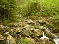 Hiking Flume Slide Trail - 2010.06.27 - panoramio.jpg