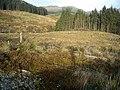 Hillside in Loch Ard Forest - geograph.org.uk - 1056352.jpg