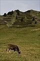 Hirschegg (3993705678).jpg
