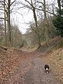 Holloway in Wendover Woods - geograph.org.uk - 1180606.jpg