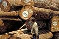 Holzbegutachtung.jpg