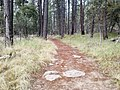 Horton Creek Trail, Payson, Arizona - panoramio (6).jpg
