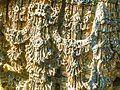 Hoysaleshwara temple, Halebidu 705.jpg