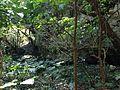 Huge rocks and forest in Sefa-Utaki 3.JPG