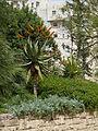 Hussamssa Garden P1220348.JPG