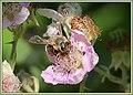 Hymenoptera on flower (42677974371).jpg