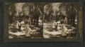 In an olive grove, Southern California, U.S.A, from Robert N. Dennis collection of stereoscopic views.png
