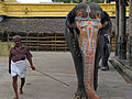 India - Wildlife - 007 - elephant in Kanchipuram (2244155874).jpg
