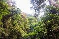 Indonesia - Bukit Lawang (26526985316).jpg
