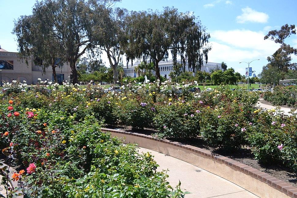 Inez Grant Parker Memorial Rose Garden, Balboa Park