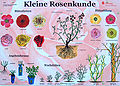 Infoschild Kleine Rosenkunde.jpg