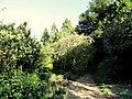 J. C. Raulston Arboretum - DSC06243.JPG