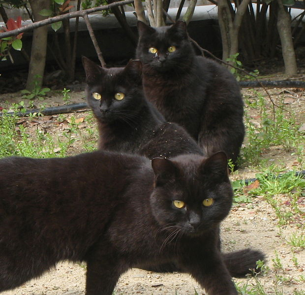 File:J i J y - Trio of cats (by).jpg