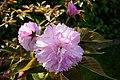 Japanese Friendship Garden (4527064898).jpg