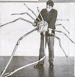 Japanese spider crab.jpg