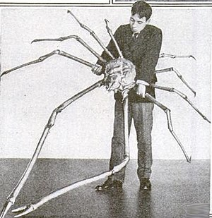 Japanese spider crab - Image: Japanese spider crab