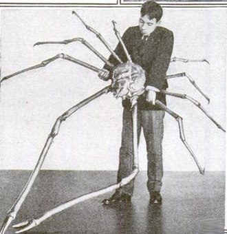 Deep-sea gigantism - Image: Japanese spider crab