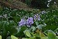 Jardim Botânico da Madeira DSC 0214 (14513394319).jpg