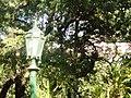 Jardim botanico - panoramio (6).jpg