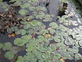Jardin botanique Besançon 016.jpg