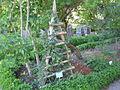 Jardin botanique Dijon 043.jpg