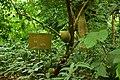 Jardin des plantees et de la nature de Porto Novo 12.jpg