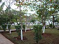 Jardines de Cottolengo TARDE INVIERNO 2008 - panoramio.jpg