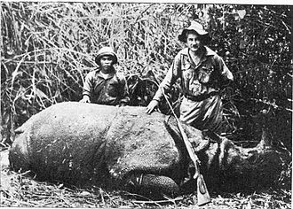 Java - Male Javan rhino shot in 1934 in West Java. Today only small numbers of Javan rhino survive in Ujung Kulon; it is the world's rarest rhino.