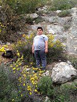 Jerusalem Forest IMG 4985.jpg