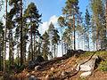 Jyväskylä - trees.jpg