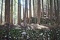 Kagamicho Mugawa, Konan, Kochi Prefecture 781-5468, Japan - panoramio (5).jpg