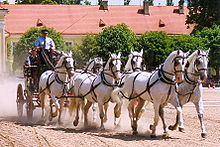 Photo de six chevaux gris attelés au trot.