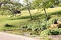 Kleine Quelle am Weg nach Unterweckestell - panoramio.jpg