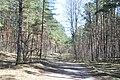 Kleistu mežs, Kleisti, Rīga, Latvia - panoramio.jpg
