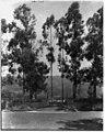 Knapp estate, Santa Barbara, Calif. LCCN2002714629.jpg