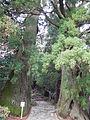 Kumano Kodo pilgrimage route Daimon-zaka World heritage 熊野古道 大門坂17.JPG