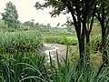 Kunming Botanical Garden - DSC03080.JPG