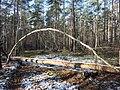 Kunst im Wald... - panoramio.jpg