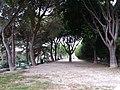 L'Estaque - Jardin de la Falaise - Haut.jpg