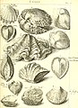 L'histoire naturelle éclaircie dans deux de ses parties principales, la lithologie et la conchyliologie - dont l'une traite des pierres et l'autre des coquillages - ouvrage dans lequel on trouve une (14595181649).jpg