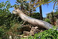 La Palma - Los Llanos - Carretera a Puerto Naos - Parque Antonio Gómez Felipe (Morera) 71 ies.jpg