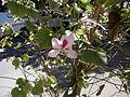 La paz plant life 22.JPG